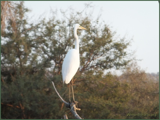 crane at Ranthambore