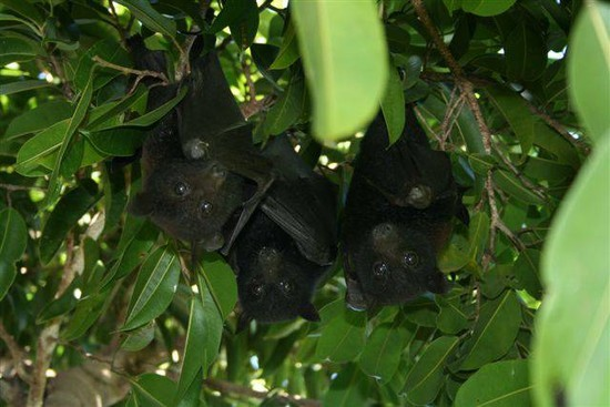 Bats Back In Nature